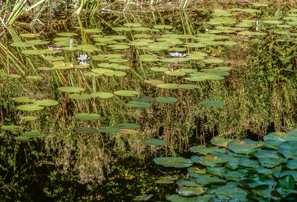 Wild Pond by Marcel Haag