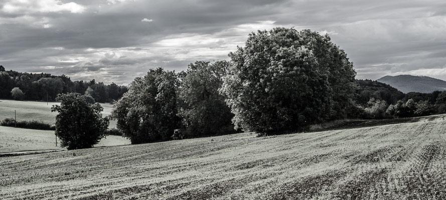 Herbstlandschaft 17 by Marcel Haag