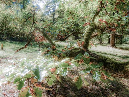 Eichenhain 8 by www.marcelhaag.com