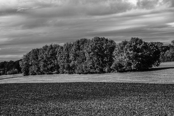 Herbstlandschaft 9 by Marcel Haag