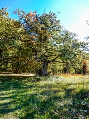 Eichenhain 5 by www.marcelhaag.com