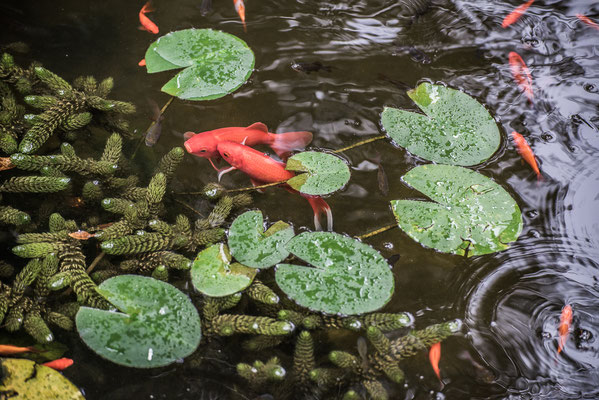 Fish Pond 1 by Marcel Haag