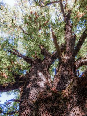 Eichenhain 3 by www.marcelhaag.com