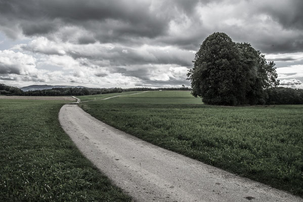 Path through Fields by Marcel Haag