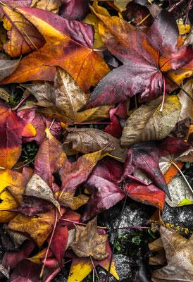 November 3 by Marcel Haag