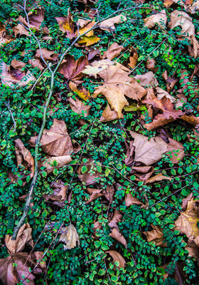 Leaves 3 by Marcel Haag