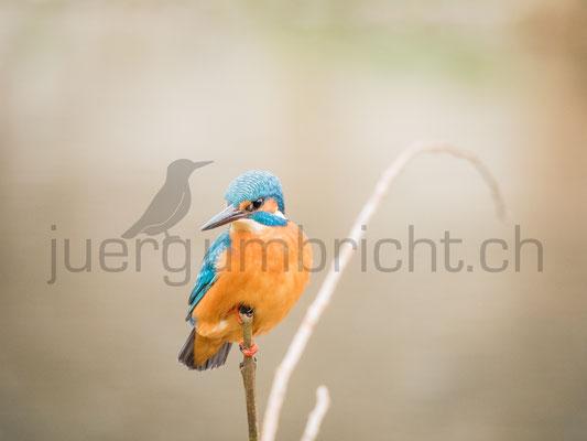 Wildlife_033