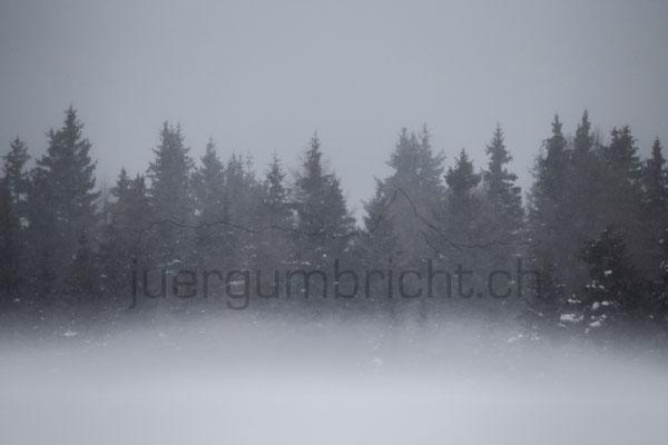 Landscape_033