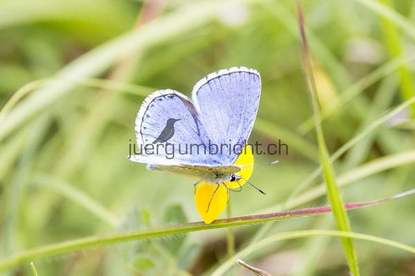 Wildlife_038