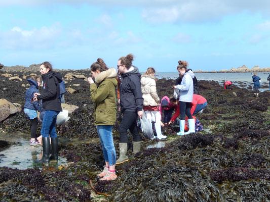 Ramassage d'algues sur la grève