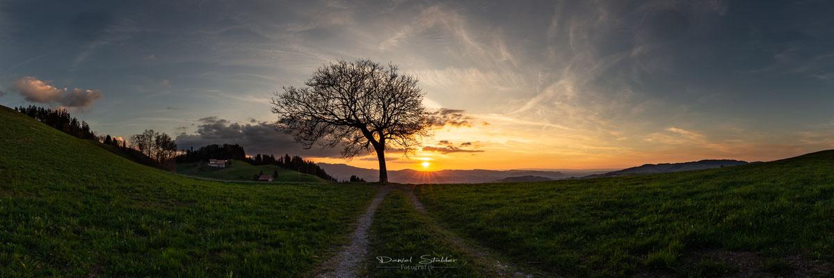 Panorama Sonnenuntergang mit Baum