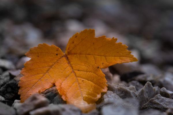Herbstblatt   -M8-