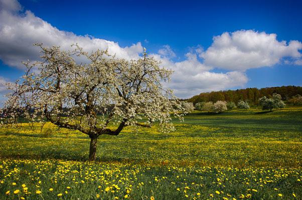 Der Frühling in seinen schönsten Farben    -L26-
