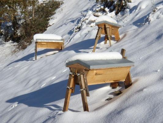 Les ruches TBH de Florent ( Pyrénées)