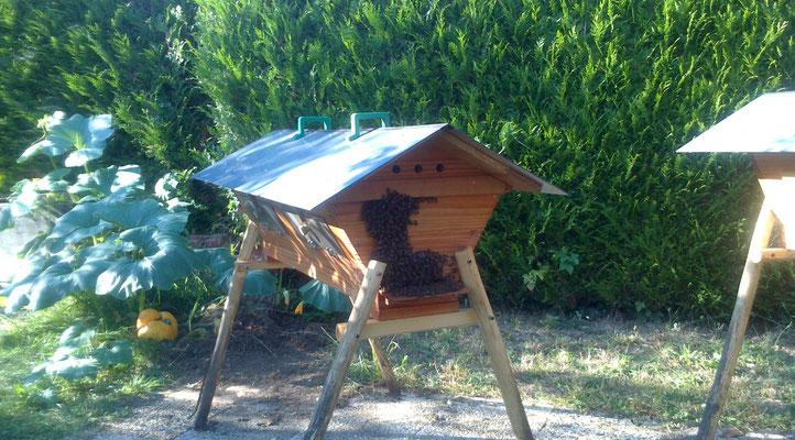 Les ruches horizontales TBH de Jean Luc (Cher)