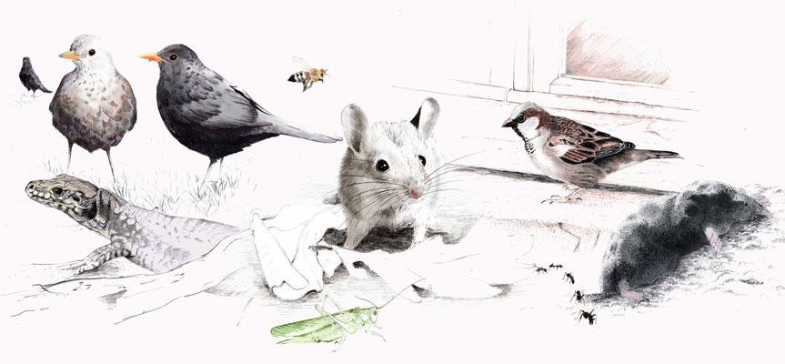 ensemble d'illustrations, crayon et colorisation numérique