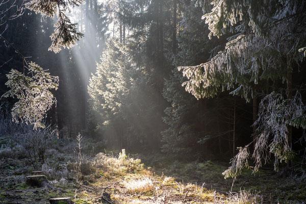 Foto: Wolfgang Schramm