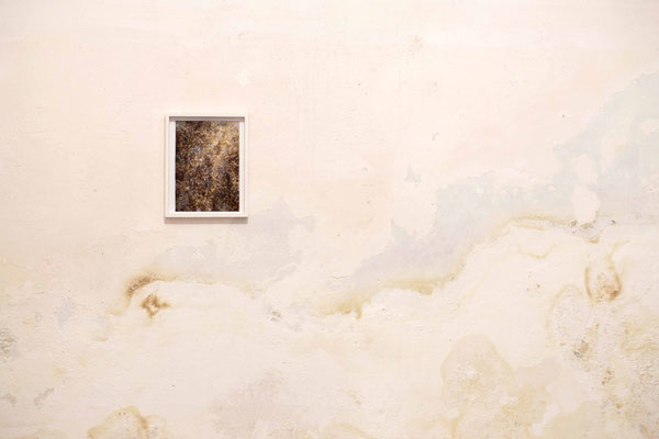 Lichene n.1, 2018