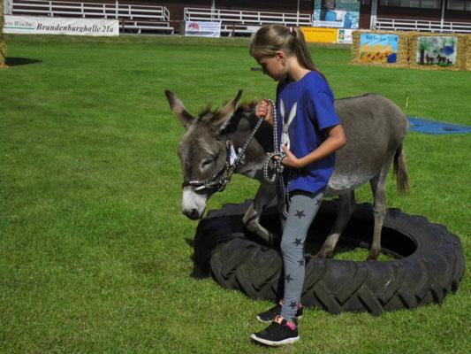 Esel-Workshop   Eselkind mit Esel Sir Henry am Hindernis