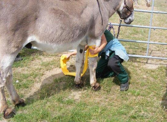 Esel-Workshop | Praktische Übungen im Kurs Grundlagen der Esel- und Mulihaltung