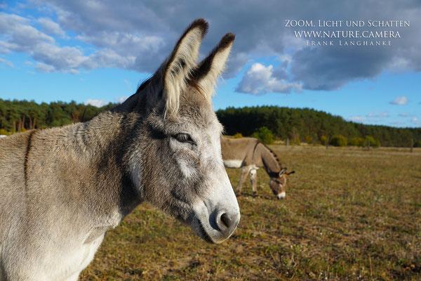 Esel Workshops & Esel Kurse bei Esel-Freunde im Havelland e.V.