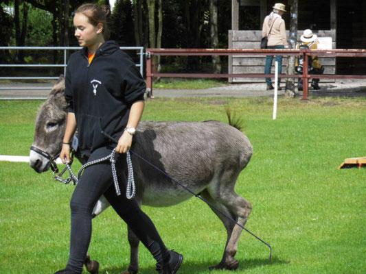 Esel-Workshop | Eselkind mit Esel Sir Henry beim gemeinsamen Trab