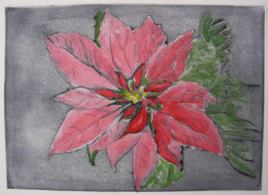"""""""Weihnachtsstern"""",handcoloriert"""