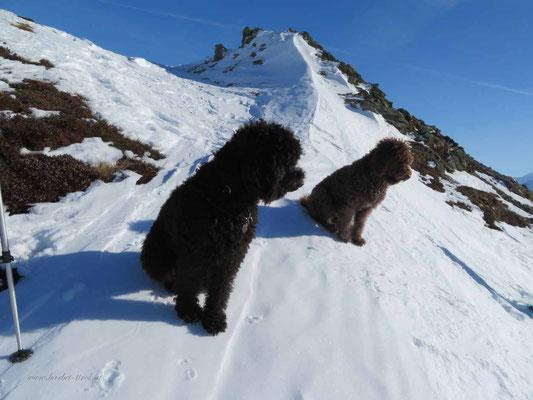 """Glori und Héloise bereits kurz unterhalb vom Gipfel, schauend... """"wo bleiben denn die anderen"""""""