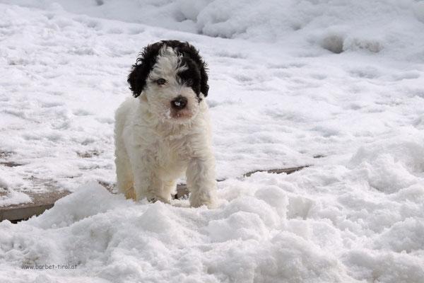"""Unsere kleine Schneeflocke Alpha """"von den TIROLERALPEN"""" erkundet die grosse weite Winterwelt."""