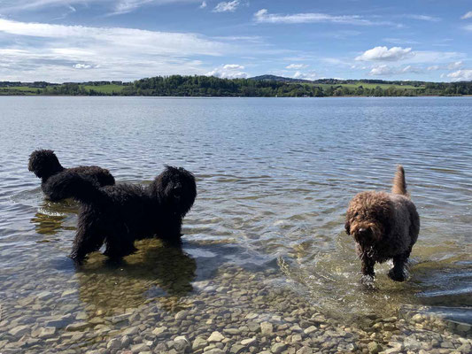 Mama Héloise und Oma Glori mit Begeisterung im Wasser. Der kleine Emilé zeigt sich noch ein wenig vorsichtig und beobachtet lieber