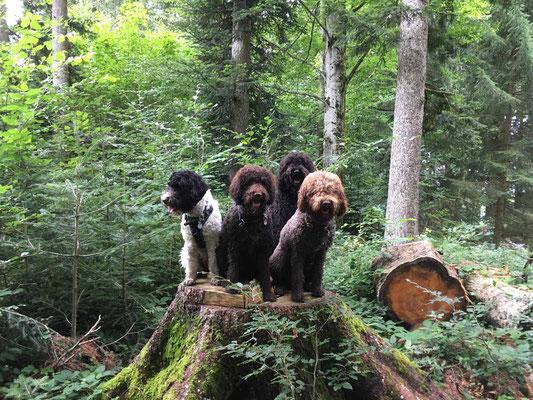 Platz für ein Familienfoto findet sich auf diesem urigen Baumstamm