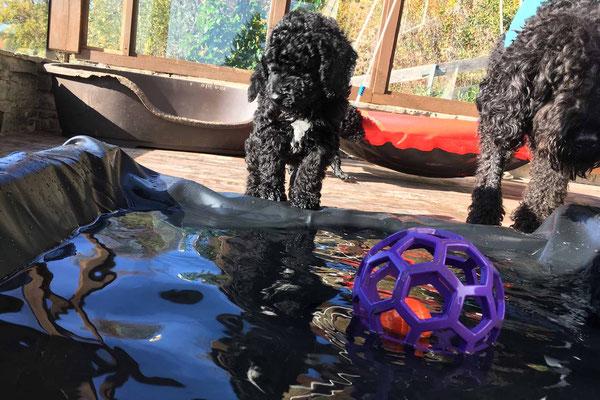 Wasserhunde brauchen Wasser........