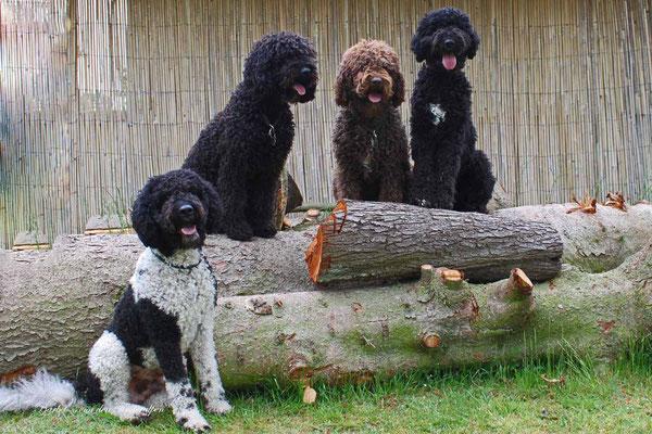 Da sind sie komplett......... Betty, Mama Glori, Tante Hélouise und Halbbruder Armstrong