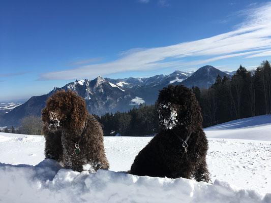Heute haben wir dem Nachbarland Bayern einen kleinen Besuch abgestattet.  Unsere Tour führte uns über Bauer am Berg zur Hohen Asten. Der Asten Hof (1.106m) ist mit der höchstgelegenste ganzjährig bewirtschaftete Bauernhof Deutschlands