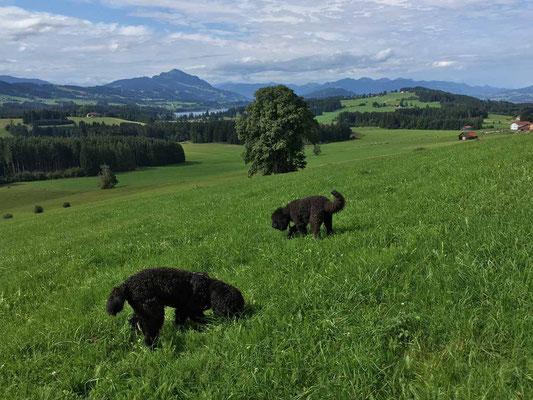 gemeinsames schnüffeln am Bodelsberg...