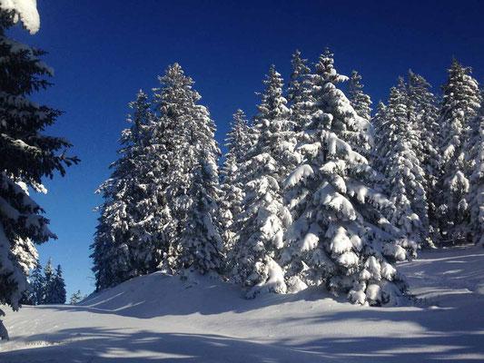 Endlich Sonne! Ein Traum! Winterwonderland