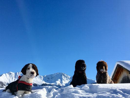 Alpha von den Tiroleralpen verbringt seinen ersten Winterurlaub in Tirol ❄️🐶🐾 natürlich dürfen Mama Glori und Tante Heloise nicht fehlen und statten Alpha und seinen lieben Menschen einen Besuch ab 🐶🐾🐾🐶🐾🐾🐶🐾🐾