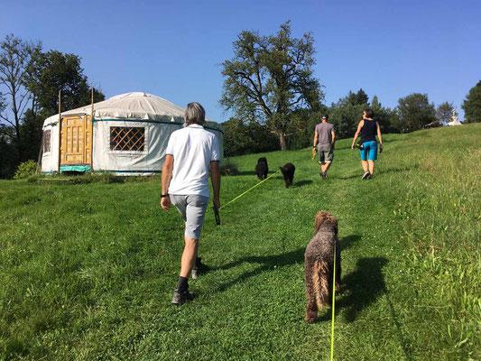 Mit unseren Hunden auf dem Weg zum Stupa