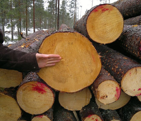 casas de madera, venta de casas de madera, casas de madera nórdica, construcción de casas de madera, casas de madera prefabricadas, casas prefabricadas, casas de madera de lujo, casas de madera nórdicas, casas de madera pasivas, casas biopasivas,