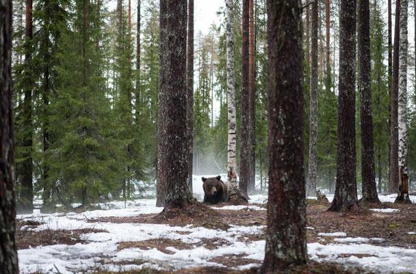 Casas de madera nórdica finlandesa.