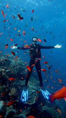 Anthias in front of diver