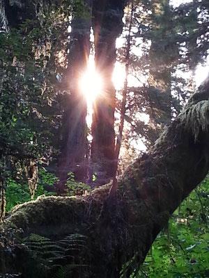 Licht ist überall