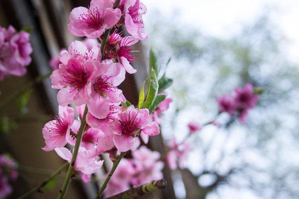 Frühling am Gut Grub