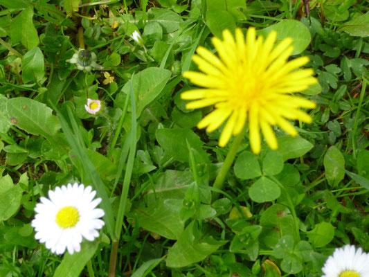 Blumen auf unserer Spielwiese