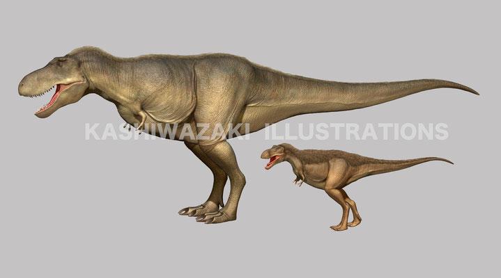 タルボサウルスの成長