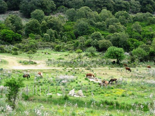 Von Gairo aus wird eine schöne Strecke durch Gairo Facuisara gefahren