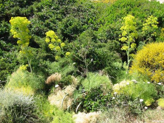 und sehr interessante Pflanzen