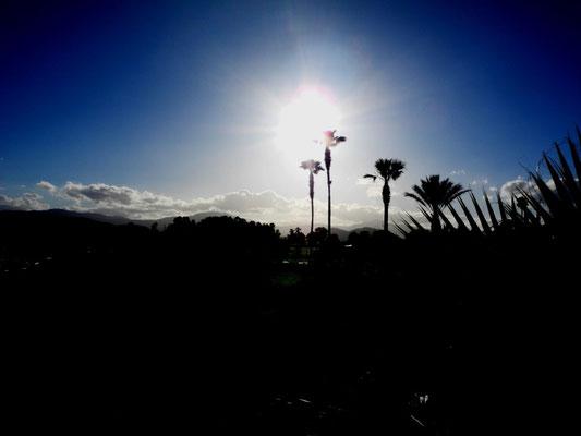 Die Palmen im Sonnenuntergang