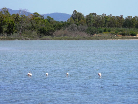 Ein See mit Flamingos
