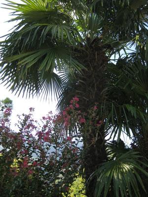 Palmen am Kalterer See